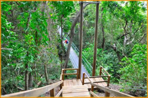 "Jungle of Roatan Island, spotting Iguana, birds, lizards, amazing wild tropical blooms and interesting ""Tarzan"" vines."