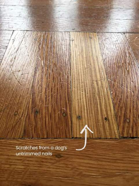 Dog Scratches in Wood Floor