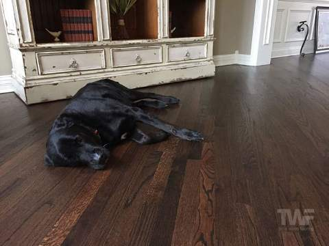 Dark Stained Oak Floor