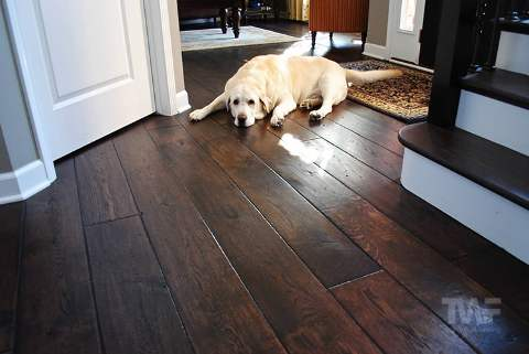 Dog on Dark Stained Floor