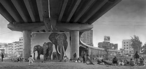 NICK BRANDT / UNDERPASS WITH ELEPHANTS